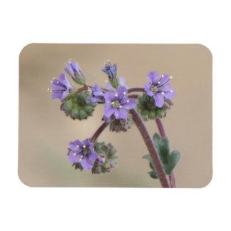 Phacelia Purple Wildflowers Rectangular Photo Magnet