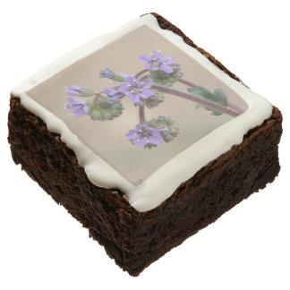 Phacelia Purple Wildflowers Square Brownie
