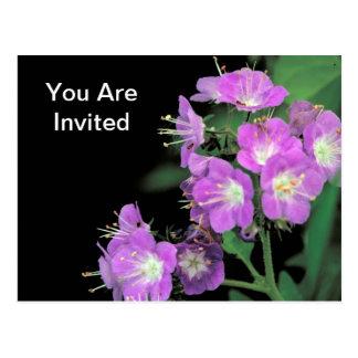 phacelia púrpura tarjetas postales