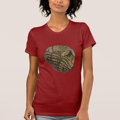 Phacops Camisetas