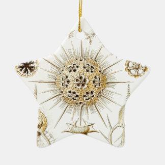 PHAEODARIA Ernst Haeckel Kunstformen der Natur Ceramic Ornament