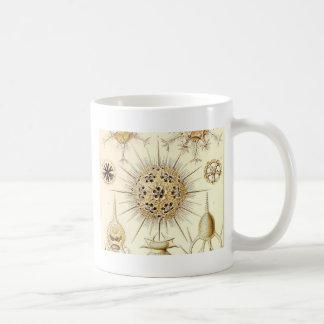PHAEODARIA Ernst Haeckel Kunstformen der Natur Coffee Mug