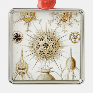 PHAEODARIA Ernst Haeckel Kunstformen der Natur Square Metal Christmas Ornament