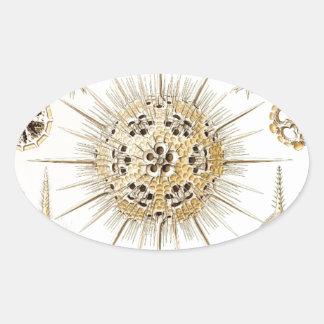 PHAEODARIA Ernst Haeckel Kunstformen der Natur Oval Sticker
