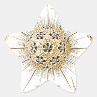PHAEODARIA Ernst Haeckel Kunstformen der Natur Star Sticker