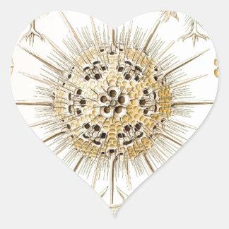 PHAEODARIA Ernst Haeckel Kunstformen der Natur Heart Sticker