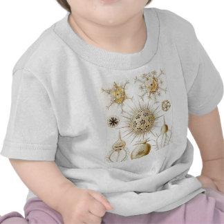 PHAEODARIA Ernst Haeckel Kunstformen der Natur T Shirts