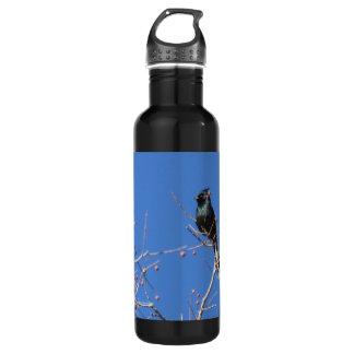 Phainopepla 24oz Water Bottle