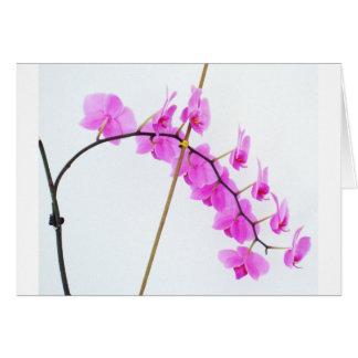 phalaenopsis 1 card