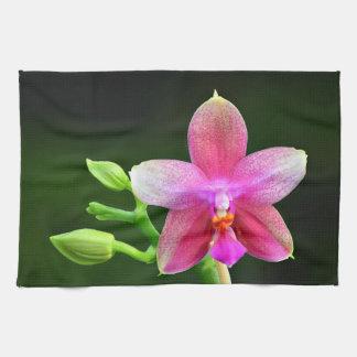 Phalaenopsis liodoro toalla de cocina 40,6cm x