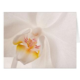 Phalaenopsis Moth Orchid Large Greeting Card