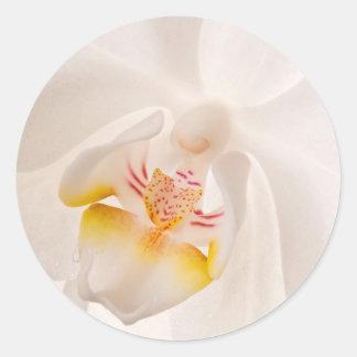 Phalaenopsis Moth Orchid Classic Round Sticker