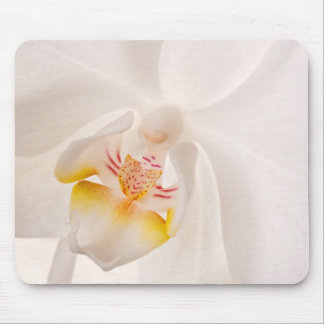 Phalaenopsis Moth Orchid Mouse Pad
