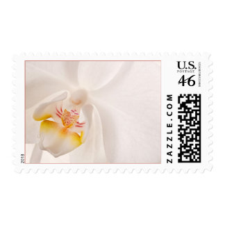 Phalaenopsis Moth Orchid Postage Stamps