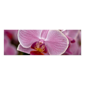 Phalaenopsis Orchid Business Card