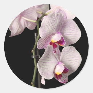Phalaenopsis orchid classic round sticker