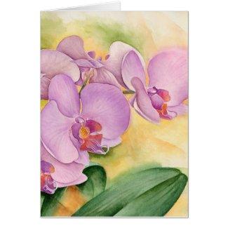Phalaenopsis Orchid Flowers - Multi Cards
