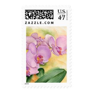 Phalaenopsis Orchid Flowers - Multi Postage