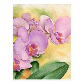 Phalaenopsis Orchid Flowers - Multi Postcard