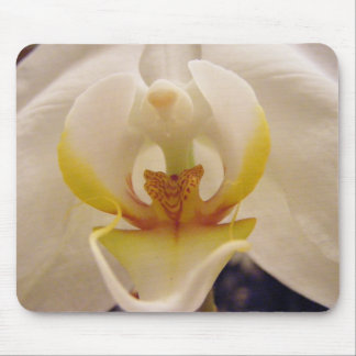 Phalaenopsis Orchid I Mouse Pad