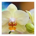 Phalaenopsis Orchid Invite