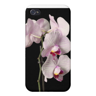 Phalaenopsis orchid iPhone 4/4S cases