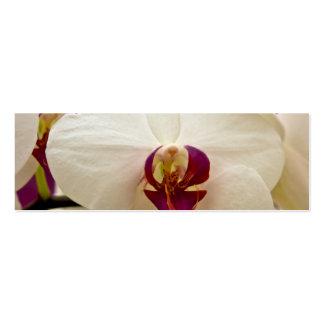 Phalaenopsis Orchid Mini Business Card