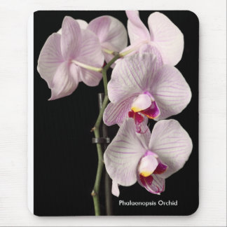 Phalaenopsis orchid mouse pad