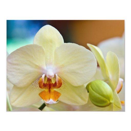Phalaenopsis Orchid Personalized Invitation