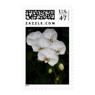 Phalaenopsis Orchid Postage