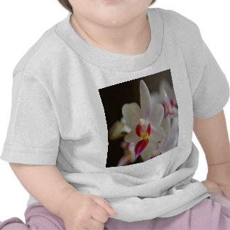 Phalaenopsis Orchid T-shirts