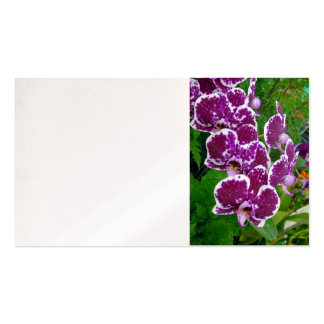 Phalaenopsis Orchids Business Card