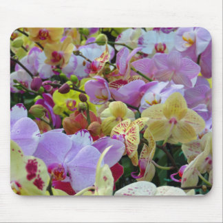Phalaenopsis Orchids Mouse Pad