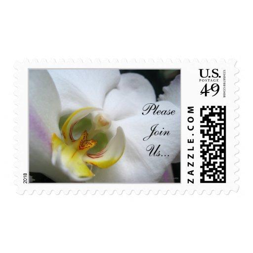 Phalaenopsis Photo Wedding Invitation Postage Postage Stamps