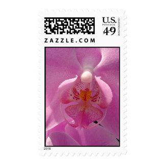 Phalaenopsis Postage Stamps