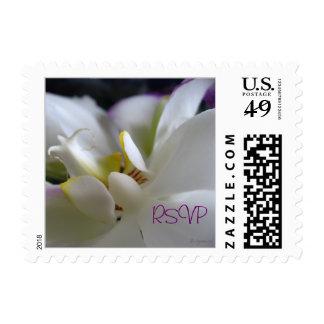Phalaenopsis Wedding RSVP Postal Square Small Postage