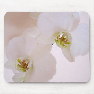 Phalaenopsis White Wild Orchid flowers in bloom Mouse Pad