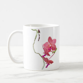 Phalenopsis Orchid Classic White Coffee Mug