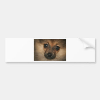 Phantom Dog Bumper Sticker