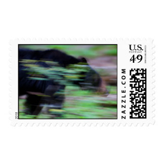 Phantom of the Forest Postage Stamp