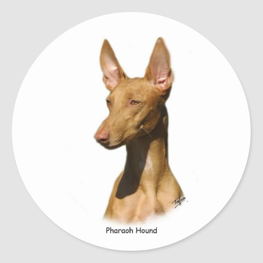 Pharaoh Hound 9P003D-60 Classic Round Sticker