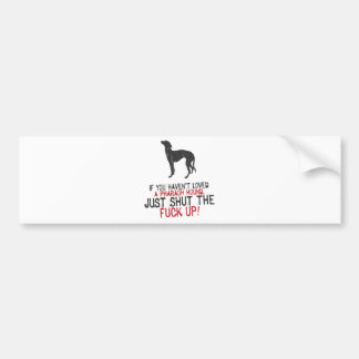 Pharaoh Hound Bumper Sticker