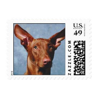 Pharaoh Hound Stamp (SMALL)