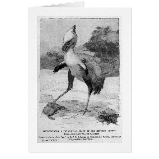 Pharorhacos art card