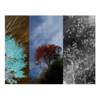 Phases Postcard
