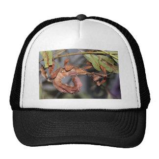 Phasmid Mesh Hats