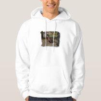 Pheasant  497 hoodie