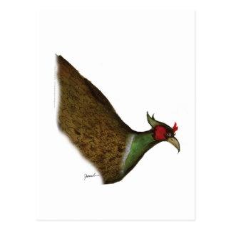 pheasant bird, tony fernandes postcard