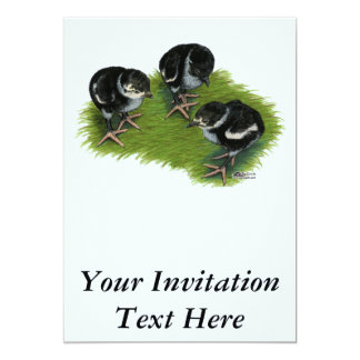 Pheasant Black Chicks Card