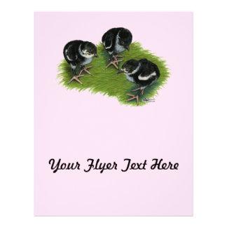 Pheasant Black Chicks Flyer